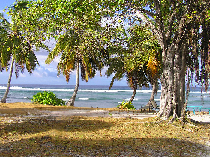 cocos-islands5: Cocos islands / Keeling islands / XKK: West Island - Soth Keeling Islands - trees by the beach - tropical scene - photo by Air West Coast - (c) Travel-Images.com - Stock Photography agency - Image Bank