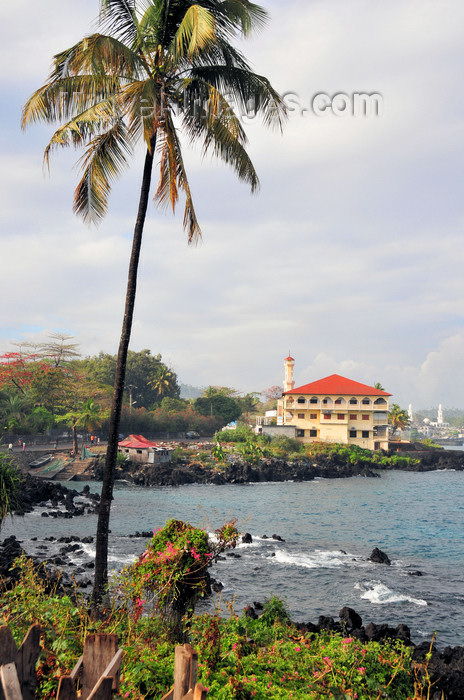 comoros32: Moroni, Grande Comore / Ngazidja, Comoros islands: the Corniche - coconut tree and Prince Said Ibrahim mosque - photo by M.Torres - (c) Travel-Images.com - Stock Photography agency - Image Bank