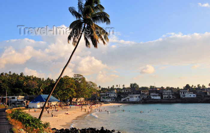 comoros7: Itsandra , Grande Comore / Ngazidja, Comoros islands: beach view - coconut tree - photo by M.Torres - (c) Travel-Images.com - Stock Photography agency - Image Bank