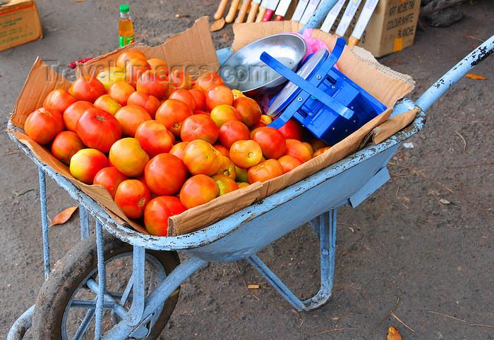 comoros78: Moroni, Grande Comore / Ngazidja, Comoros islands: tomatoes and scale on a wheelbarrow - market scene - Dashe - photo by M.Torres - (c) Travel-Images.com - Stock Photography agency - Image Bank
