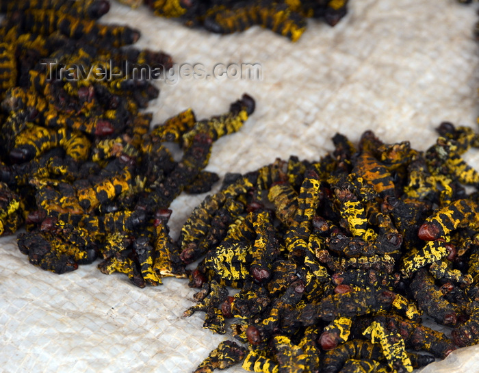 congo61: Brazzaville, Congo: caterpillars for sale - these black and yellow insect larvae are appreciated as snacks - market stall on Rue de Maya-Maya - photo by M.Torres - (c) Travel-Images.com - Stock Photography agency - Image Bank