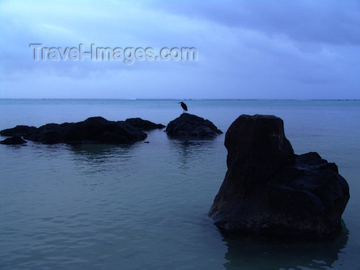 cook2: Cook Islands - Aitutaki island: bird on rock in lagoon - photo by B.Goode - (c) Travel-Images.com - Stock Photography agency - Image Bank