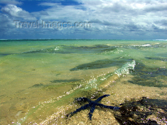 cook27: Cook Islands - Rarotonga island: starfish in shallow water - beach - photo by B.Goode - (c) Travel-Images.com - Stock Photography agency - Image Bank