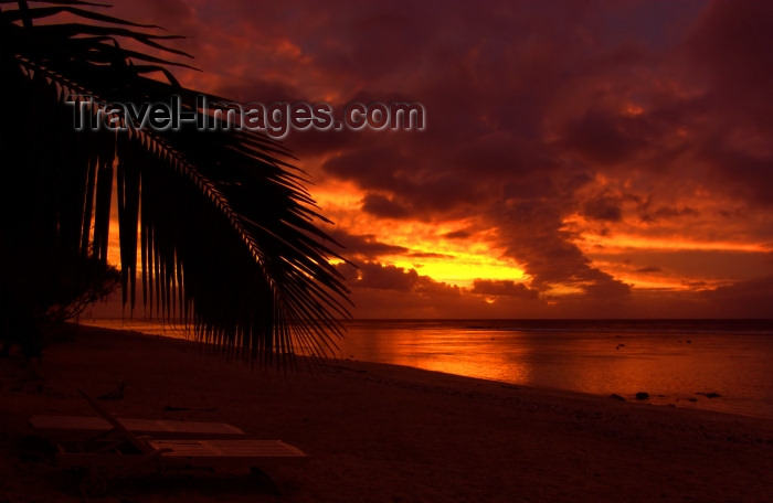 cook44: Cook Islands - Rarotonga island: palm silhouette - sunset - photo by B.Goode - (c) Travel-Images.com - Stock Photography agency - Image Bank