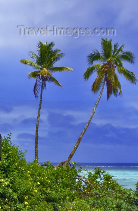 cook51: Cook Islands - Aitutaki: palmtrees - photo by B.Goode - (c) Travel-Images.com - Stock Photography agency - Image Bank