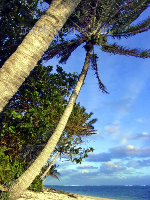 cook58: Cook Islands - Aitutaki: coconut trees over the beach - photo by B.Goode - (c) Travel-Images.com - Stock Photography agency - Image Bank