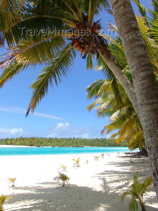 cook9: Cook Islands - Aitutaki island: palm tree and beach on One Foot Island / Tapuaetai - palm-fringed beach - photo by B.Goode - (c) Travel-Images.com - Stock Photography agency - Image Bank