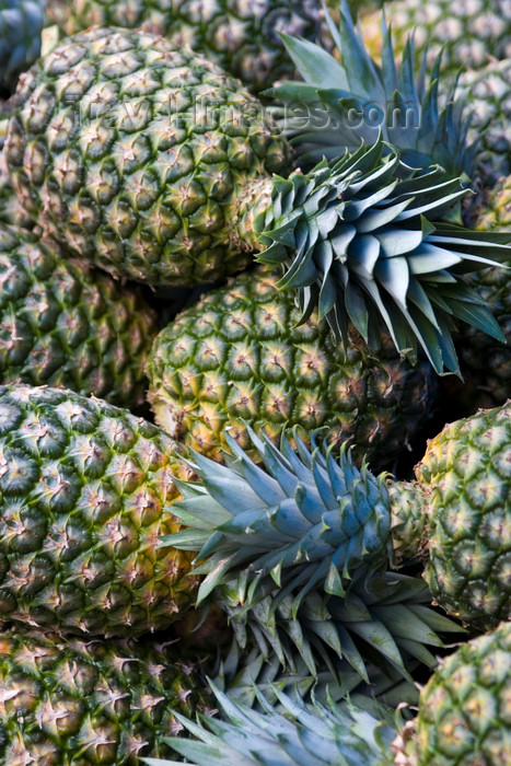 costa-rica25: Costa Rica - Alajuela province: pineapples at a Costarican market - Ananas sativus - photo by H.Olarte - (c) Travel-Images.com - Stock Photography agency - Image Bank