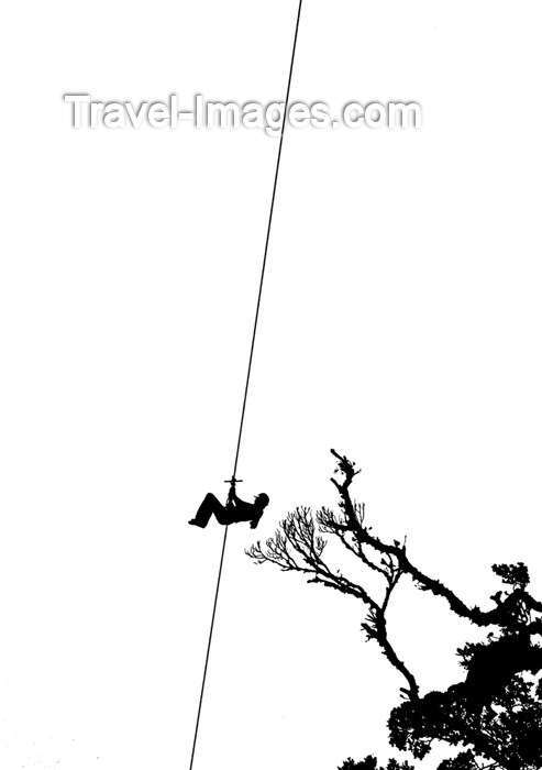 costa-rica62: Costa Rica, Monteverde: sky trekker silhouette, clutching tree branches - rain forest canopy tour - photo by B.Cain - (c) Travel-Images.com - Stock Photography agency - Image Bank