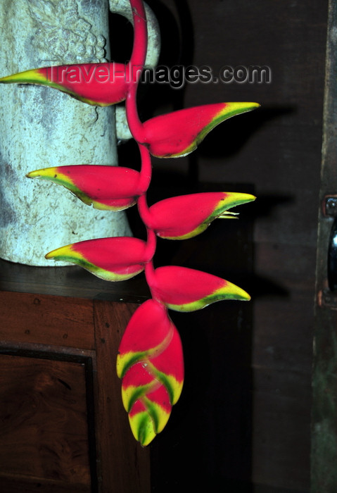 costa-rica86: Puerto Viejo de Sarapiquí, Heredia province, Costa Rica: Hanging Heliconia inflorescence - tropical flower - photo by M.Torres - (c) Travel-Images.com - Stock Photography agency - Image Bank