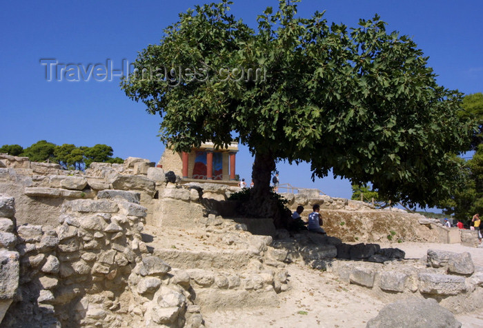 crete98: Crete, Greece - Knossos palace (Heraklion prefecture): under the shade of a fig tree (photo by A.Stepanenko) - (c) Travel-Images.com - Stock Photography agency - Image Bank