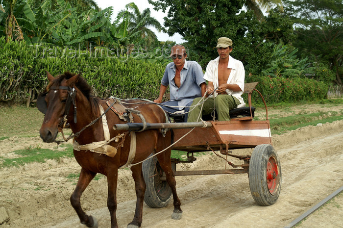 cuba101: Cuba - Holguín province - horse cart - photo by G.Friedman - (c) Travel-Images.com - Stock Photography agency - Image Bank