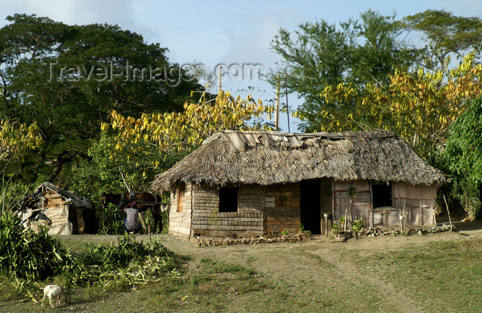 cuba106: Cuba - Holguín province - nicely kept shack - photo by G.Friedman - (c) Travel-Images.com - Stock Photography agency - Image Bank