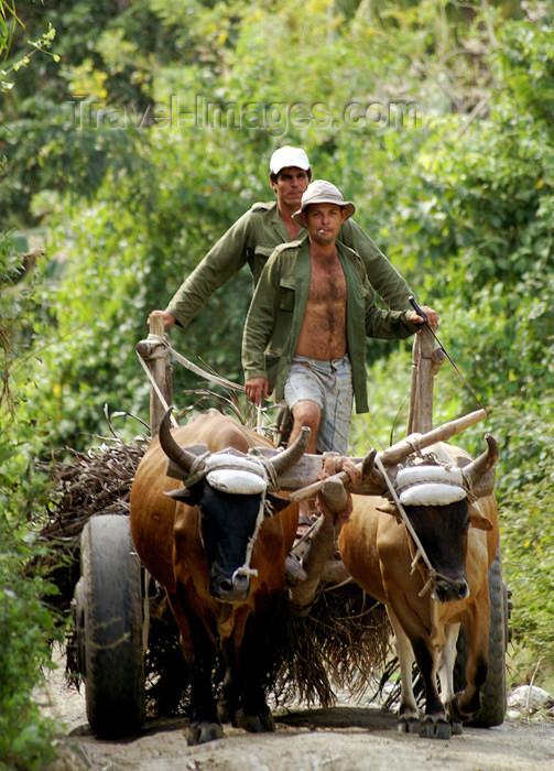 cuba107: Cuba - Holguín province - ox cart - photo by G.Friedman - (c) Travel-Images.com - Stock Photography agency - Image Bank