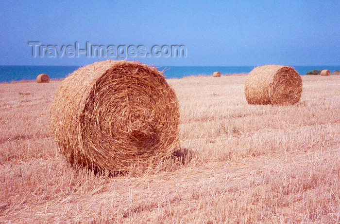 cyprus4: Cyprus - near Mavroli - Paphos district: harvest - round hay bales - photo by Miguel Torres - (c) Travel-Images.com - Stock Photography agency - Image Bank