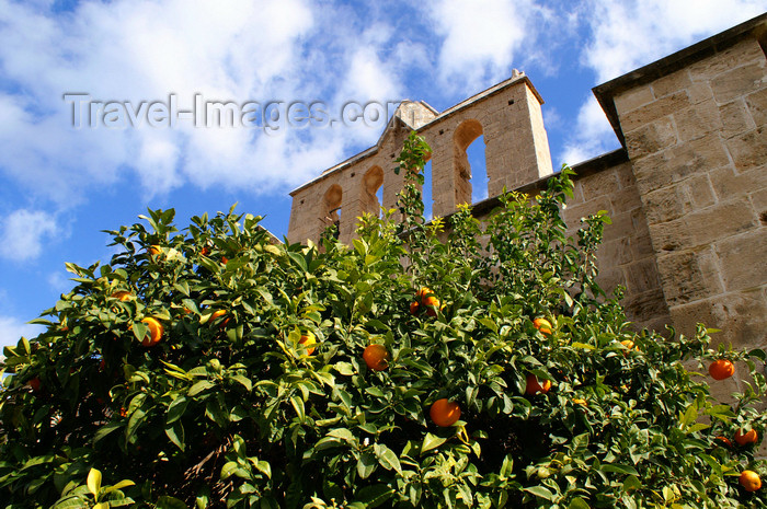 cyprusn54: Bellapais, Kyrenia district, North Cyprus: Bellapais abbey - orange tree - photo by A.Ferrari - (c) Travel-Images.com - Stock Photography agency - Image Bank