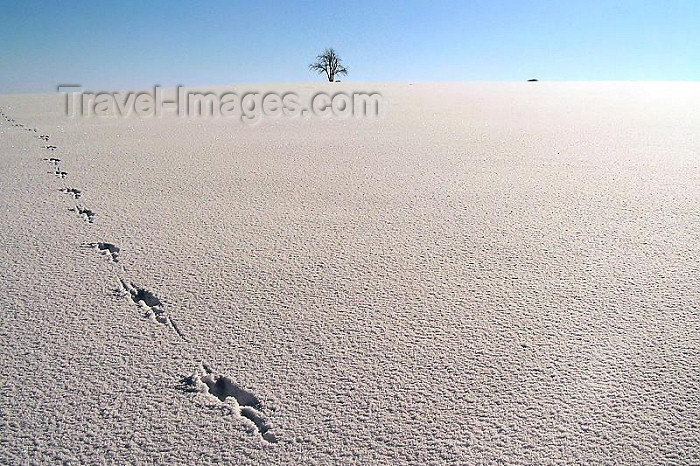 czech248: Czech Republic - Krkonose mountains: white desert - photo by J.Kaman - (c) Travel-Images.com - Stock Photography agency - Image Bank
