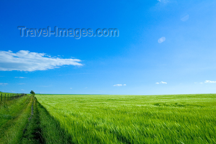 czech366: Czech Republic - Holesov: farming fields - agriculture - Moravia, Central Europe (photo by P.Gustafson) - (c) Travel-Images.com - Stock Photography agency - Image Bank
