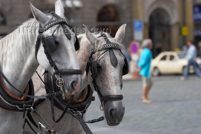 czech420: Horse carriages. Staromestske Namesti. Prague, Czech Republic - photo by H.Olarte - (c) Travel-Images.com - Stock Photography agency - Image Bank