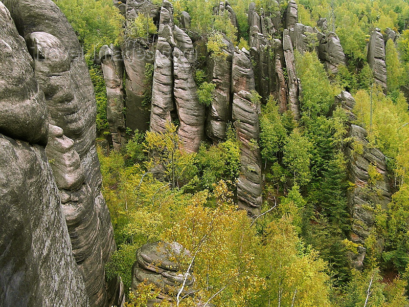czech517: Czech Republic - Broumov area - Nachod District: pinnacles and forest - Broumovske steny - Hradec Kralove Region - photo by J.Kaman - (c) Travel-Images.com - Stock Photography agency - Image Bank