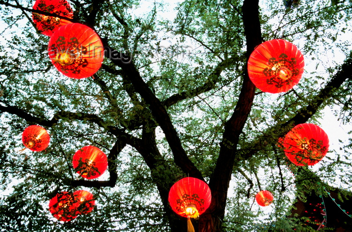 denmark71: Copenhagen, Denmark: Chinese paper lanterns hanging on tree in Tivoli gardens, low angle view - photo by K.Gapys - (c) Travel-Images.com - Stock Photography agency - Image Bank