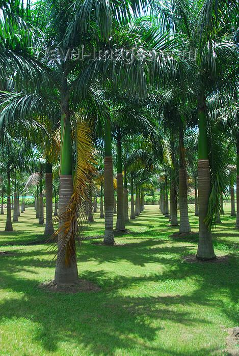 dominican121: Higüey, Dominican Republic: palm tree garden by the Basilica of Our Lady - Basilica de Nuestra Señora de la Altagracia - photo by M.Torres - (c) Travel-Images.com - Stock Photography agency - Image Bank