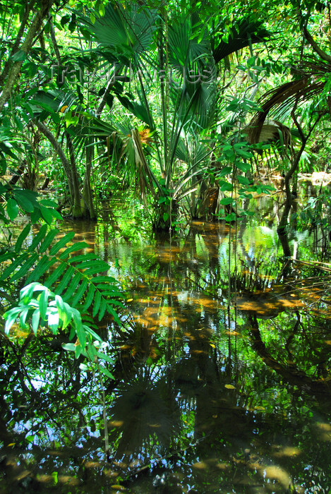dominican141: Punta Cana, Dominican Republic: a swamp - photo by M.Torres - (c) Travel-Images.com - Stock Photography agency - Image Bank