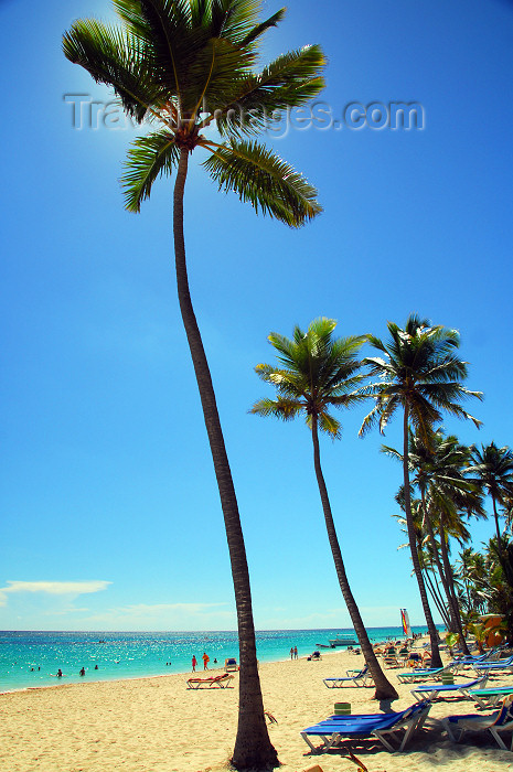 dominican169: Punta Cana, Dominican Republic: sea and tall coconut palms - Arena Gorda Beach - photo by M.Torres - (c) Travel-Images.com - Stock Photography agency - Image Bank