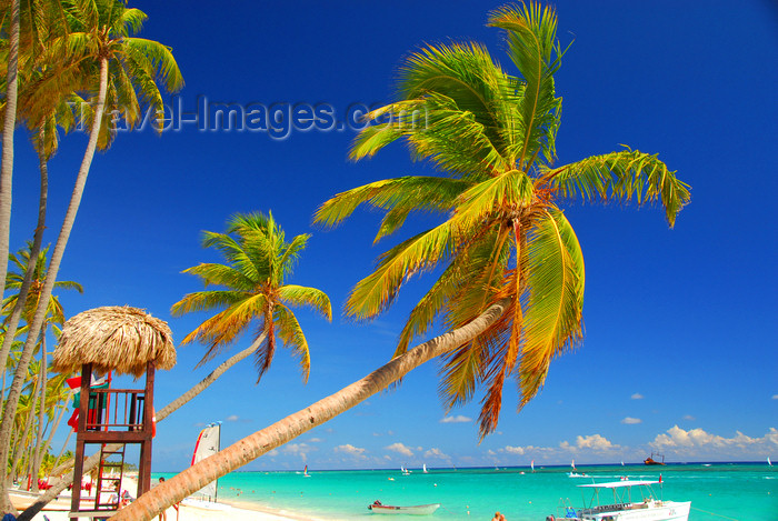 dominican177: Punta Cana, Dominican Republic: coconut trees lean over a perfect beach - Arena Gorda Beach - photo by M.Torres - (c) Travel-Images.com - Stock Photography agency - Image Bank