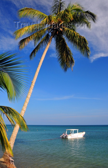 dominican344: Río San Juan, María Trinidad Sánchez province, Dominican republic: coconut tree leaning over the sea - small boat - beach scene - photo by M.Torres - (c) Travel-Images.com - Stock Photography agency - Image Bank