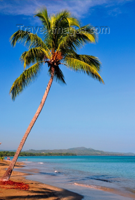 dominican348: Río San Juan, María Trinidad Sánchez province, Dominican republic: beach with coconut tree leaning over the sea - tropical scene - photo by M.Torres - (c) Travel-Images.com - Stock Photography agency - Image Bank