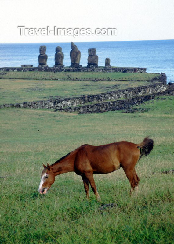 easter6: Easter Island - Ahu Tahai: horse in the fields near the port town of Hanga Roa - moais in the background - Rapa Nui - Ilha da Pascoa, Isla de Pascua - photo by Rod Eime - (c) Travel-Images.com - Stock Photography agency - Image Bank