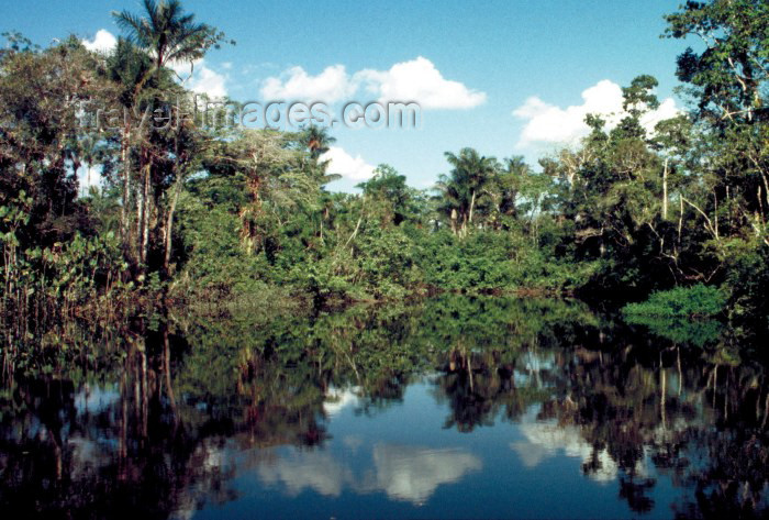 ecuador18: Ecuadorian Amazonia: rainforest - trees and the Pastaza River (photo by Rod Eime) - (c) Travel-Images.com - Stock Photography agency - Image Bank