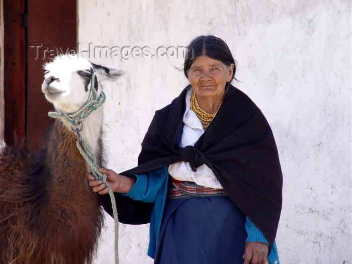 ecuador24: Ecuador - Otavalo (Imbabura province): llama (Lama glama) and otavalena (photo by A.Caudron) - (c) Travel-Images.com - Stock Photography agency - Image Bank