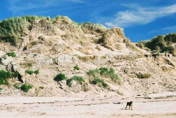 england117: England (UK) - Formby (Merseyside): sand dunes - photo by D.Jackson - (c) Travel-Images.com - Stock Photography agency - Image Bank