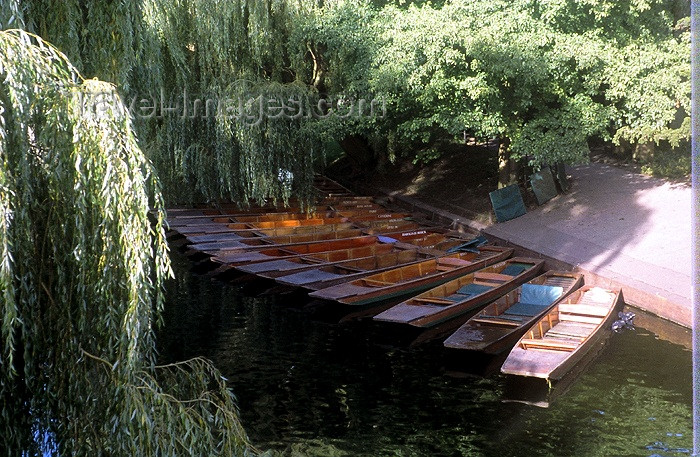 england176: England (UK) - Cambridge  (Cambridgeshire): Cambridge: punts and weeping willows - river Cam - photo by A.Sen - (c) Travel-Images.com - Stock Photography agency - Image Bank