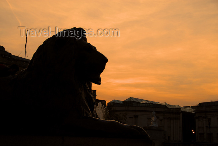 england21: London / LHR / LGW / STN / LTN / LCY : Trafalgar square - lion at the base of Nelson's column - dusk - photo by Miguel Torres - (c) Travel-Images.com - Stock Photography agency - Image Bank