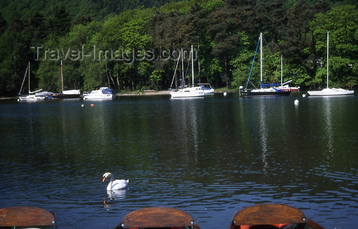england320: England (UK) - Windermere lake - Lake District: swan and yachts (photo by T.Brown) - (c) Travel-Images.com - Stock Photography agency - Image Bank