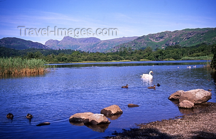 england398: England - Elterwater - Lake District - Cumbria - Tarn - photo by Tony Brown - (c) Travel-Images.com - Stock Photography agency - Image Bank
