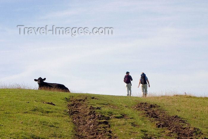 england595: Hope Valley, Peak District, Derbyshire, England:  cow and hikers - fellwalking near Castleton - photo by I.Middleton - (c) Travel-Images.com - Stock Photography agency - Image Bank
