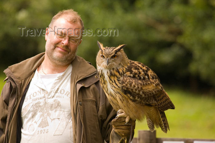 england729: Exmoor NP, Somerset, South West England, UK: visitor with great horned owl at Exmoor Falconry - photo by I.Middleton - (c) Travel-Images.com - Stock Photography agency - Image Bank
