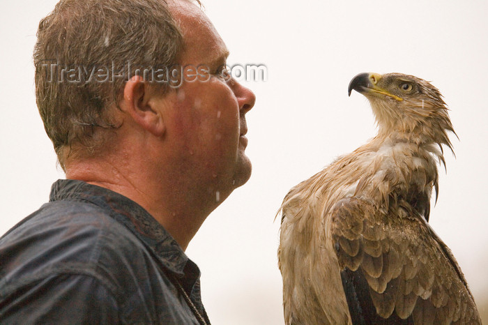 england732: Exmoor NP, Somerset, South West England, UK: hawk with trainer in Exmoor Falconry - photo by I.Middleton - (c) Travel-Images.com - Stock Photography agency - Image Bank