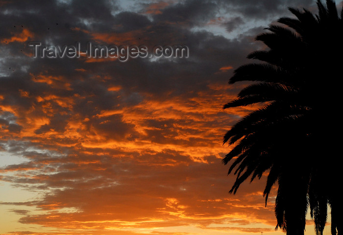 eritrea15: Eritrea - Asmara: sunset - sky and palmtree - photo by E.Petitalot - (c) Travel-Images.com - Stock Photography agency - Image Bank