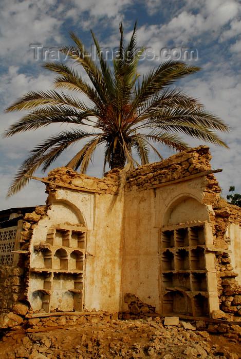 eritrea27: Eritrea - Massawa / Mitsiwa / Massaua / Batsi, Northern Red Sea region: palmtree and ruins in the old quarter - photo by E.Petitalot - (c) Travel-Images.com - Stock Photography agency - Image Bank