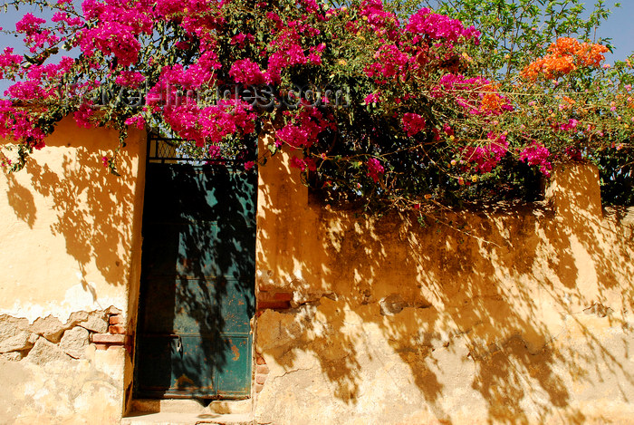 eritrea35: Eritrea - Keren, Anseba region: door and flowers - photo by E.Petitalot - (c) Travel-Images.com - Stock Photography agency - Image Bank