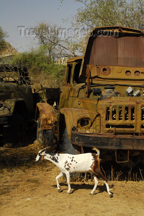 eritrea37: Eritrea - Keren, Anseba region: goat in a truck cemetery - rusting Soviety military trucks - photo by E.Petitalot - (c) Travel-Images.com - Stock Photography agency - Image Bank