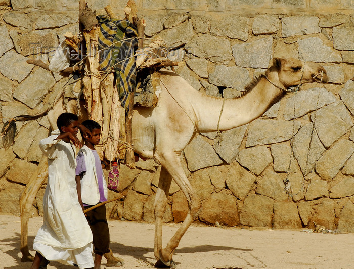 eritrea40: Eritrea - Keren, Anseba region: boys with camel tranporting wood for the weekly market - photo by E.Petitalot - (c) Travel-Images.com - Stock Photography agency - Image Bank