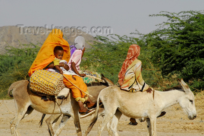 eritrea51: Eritrea - Hagaz, Anseba region - a family on donkeys travels in desert - photo by E.Petitalot - (c) Travel-Images.com - Stock Photography agency - Image Bank