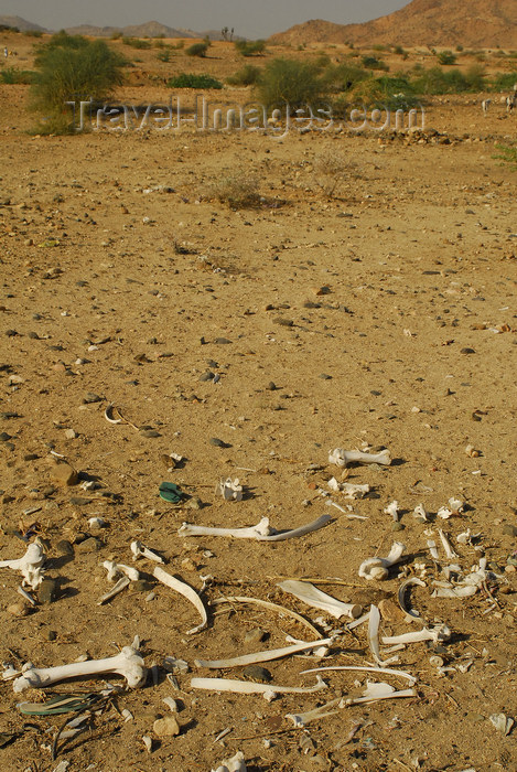eritrea57: Eritrea - Hagaz, Anseba region - animal bones in the desert - photo by E.Petitalot - (c) Travel-Images.com - Stock Photography agency - Image Bank