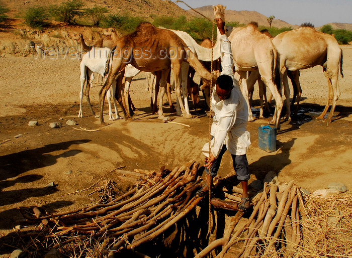 eritrea63: Eritrea - Hagaz, Anseba region - desert well - a man drawing water for his camels - photo by E.Petitalot - (c) Travel-Images.com - Stock Photography agency - Image Bank
